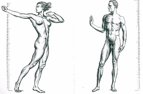 anatomy-of-man